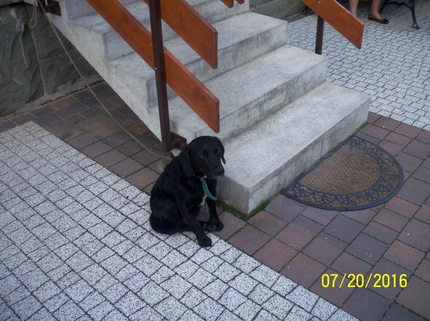 Znaleziono psa