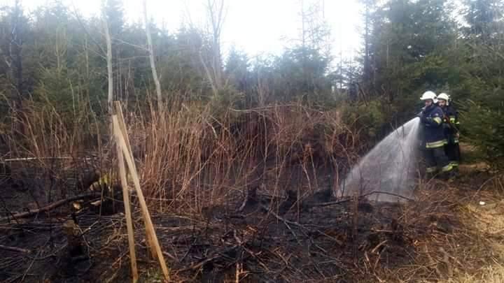 Straż pożarna apeluje: nie wypalaj traw!