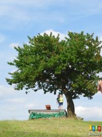 Magiczny koncert pod Magicznym Drzewem